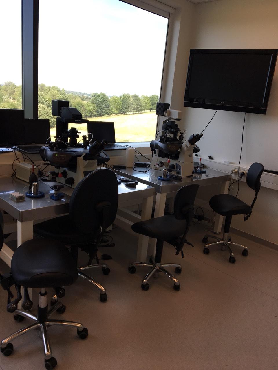 Специалисты «Тонус МАМА» приняли участие в ежегодном продвинутом курсе для эмбриологов