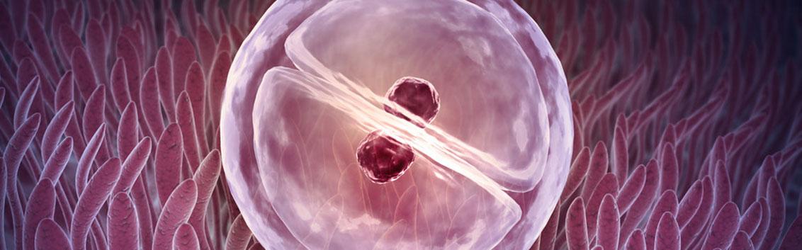 Программа ЭКО с использованием донорских яйцеклеток